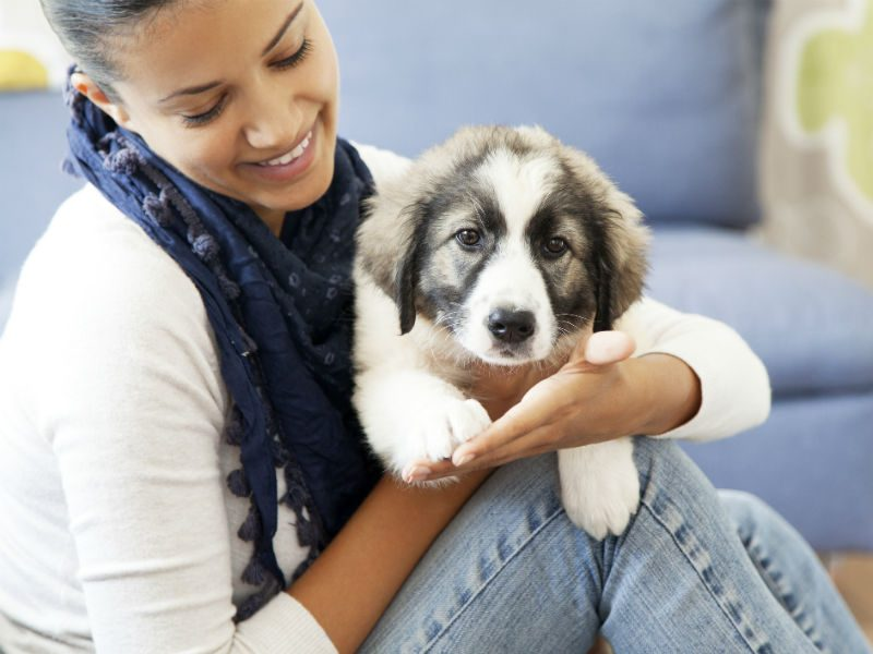 Show Your Pet That You Love It By Getting Pet Insurance